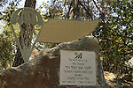 Israel, Upper Galilee, the memorial to Yuval Nir on the trail to Koach fortress