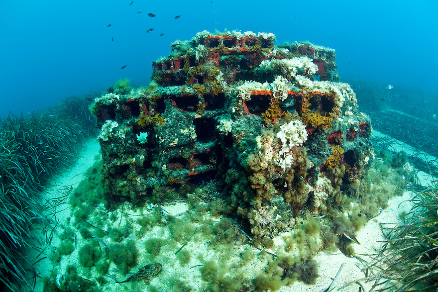 An artificial reef submerged in between the Posidonia oceanica bed, Larvotto Marine Reserve, Monaco, Mediterranean Sea<br /> Mission: Larvotto marine Reserve