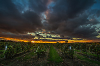 Sunset over grapvines in the Arkansas River Valley Wine Country.