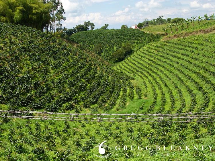 coffee farm colombia travel photo gregg bleakney image collection. Black Bedroom Furniture Sets. Home Design Ideas