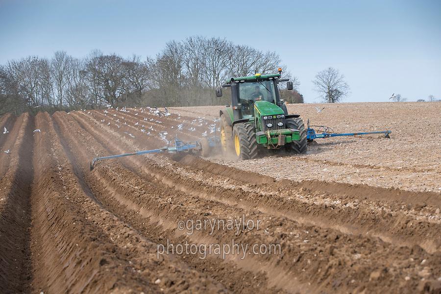 Forming beds for destoning potato land - Norfolk, March