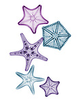 X-ray image of margined sea stars (cool colors on white) by Jim Wehtje, specialist in x-ray art and design images.