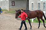 HOT SPRINGS, AR - APRIL 14: Combatant #9, walking from the barn area to the paddock before the Arkansas Derby at Oaklawn Park on April 14, 2018 in Hot Springs, Arkansas. (Photo by Justin Manning/Eclipse Sportswire/Getty Images)