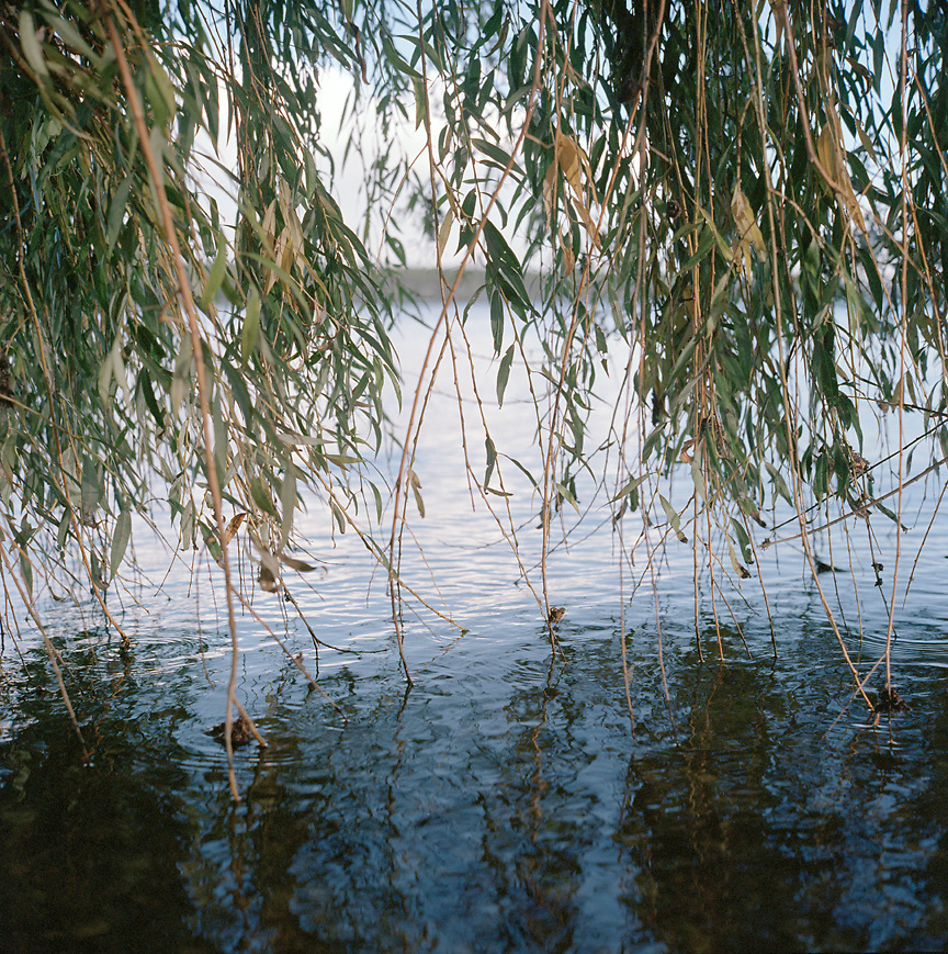 Trees meeting Lago di Mezzo in Mantova, ITALY