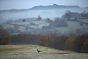 01/05/16<br /> <br /> A pheasant walks across a golf course as frost and mist cling the hills around Ashbourne, in the Derbyshire Peak District after overnight temperatures dropped below zero on the first day of May.  <br /> <br /> All Rights Reserved: F Stop Press Ltd. +44(0)1335 418365   www.fstoppress.com.