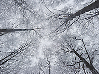 FOREST_LOCATION_90169