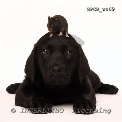 Xavier, ANIMALS, fondless, photos, SPCHWS69,#A#