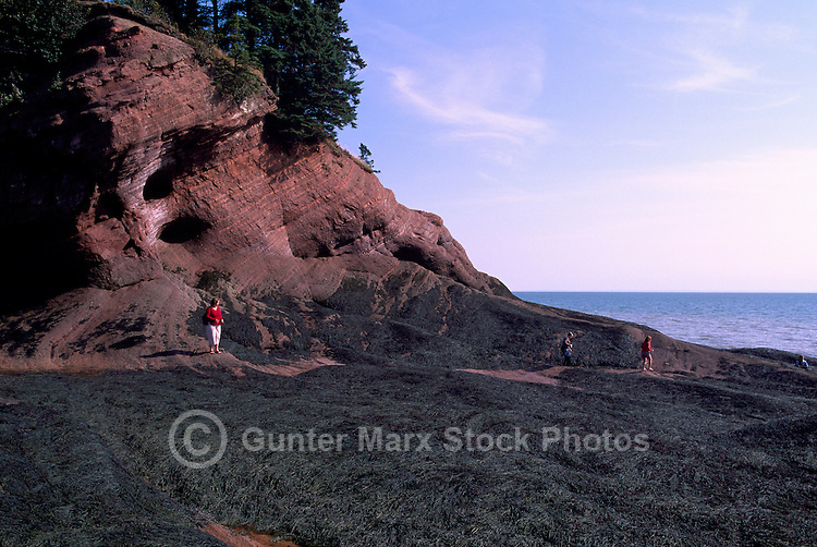 Bay of Fundy Shoreline, St. Martins, NB, New Brunswick, Canada - Sea Caves at Mac's Beach at Low Tide