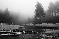 Ruby Beach Fog, Olympic NP, WA.<br />