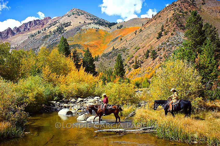 Fall colors, cowboy and cowgirl riding horses across creek. Bishop Canyon, Eastern Sierra, California