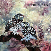 Simon, REALISTIC ANIMALS, REALISTISCHE TIERE, ANIMALES REALISTICOS, paintings+++++Card_KateF_LittleOwls,GBWR116,#a#, EVERYDAY