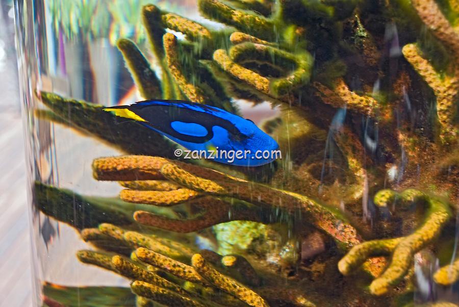 Malibu CA, Lumber Yard, courtyard, aquatic fish tank, Freestanding aquarium,