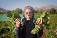 Palermo: fruitore dell'orto urbano mostra soddisfatto le sue lattughe.<br /> Palermo: Community garden within the city