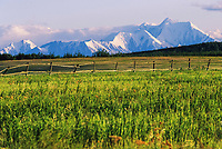 Snow covered Mt Hayes of the Alaska range, and a summer green field with relic farming fence, Delta Junction, Alaska