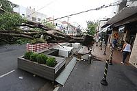 03.03.2019 - Queda de árvore na rua Luis Gois em SP