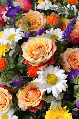 Gisela, FLOWERS, photos(DTGK1260,#F#) Blumen, flores, retrato
