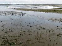 Wattwanderung vor der der Insel Schiermonnikoog, Provinz Friesland, Niederlande, UNESCO-Weltnaturerbe