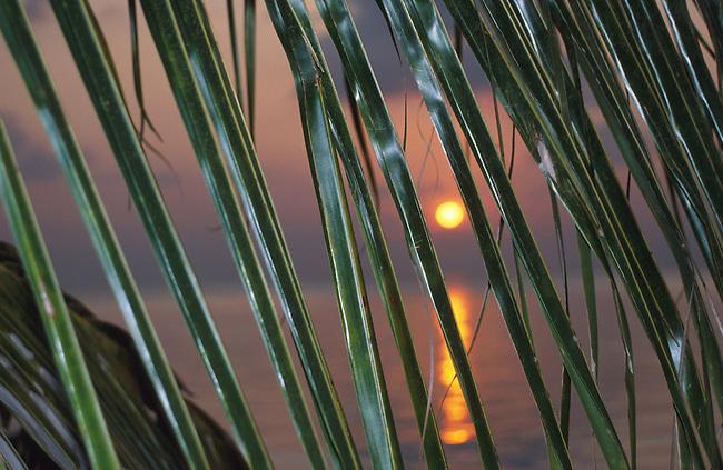 Coucher de soleil. *** Sunset