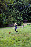 CANADA, Vancouver, British Columbia, young girls chase chickens in Port Graves, Gambier Island, Howe Sound