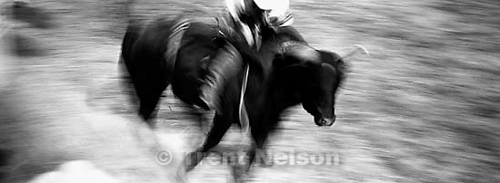 Bullrider. Round Valley Rodeo.<br />