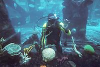 Iles Bahamas / New Providence et Paradise Island / Nassau: Hotel Atlantis à Paradise Island-les aquariums géants plongeur chargé de l'entretien