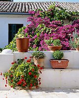 Greece, Corfu: Flowers & Pots | Griechenland, Korfu: bluehende Bougainvillea and Topfblumen