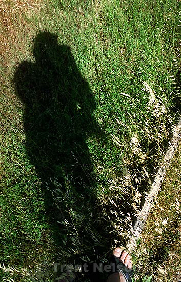 Trent feet and shadow and grass.<br />