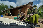 Women break up soaked cassava and lay it in the sun to dry in Karonga, an area in northern Malawi which has been hit hard by drought and hunger.