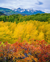 Uncompahgre National Forest, CO<br /> Fall colored oaks and cottonwoods in East Dallas Creek valley with the distant peaks of the San Juan Range