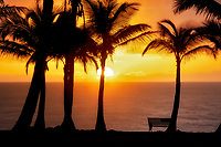 Palm trees and sunrise. with bench. Near Pahoa. Hawaii, The Island of Hawaii. The Big island