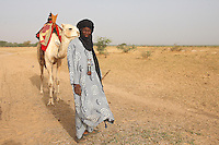 A Songhay man comes back to the village camels in Sahel Burkina faso after a work  day