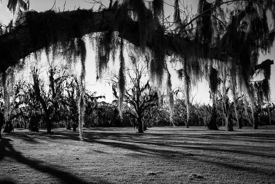 Spanish moss hangs from old oak trees on St. Helena Island. The people of St. Helena Island have been able to stave off major development on the island. Significant planning efforts have led to restrictive development regulations to ensure the island retains its rural character and preserves its cultural and historic resources. Condominiums and gated communities are not allowed on St. Helena Island and some rural land has been preserved through conservation easements. Much of the island is still owned by the Gullah through heirs property arrangements.