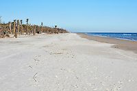 Along the beach at Little Talbot Island State Park near Jacksonville
