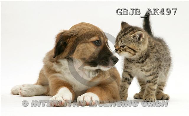 Kim, ANIMALS, fondless, photos, dog, kitten(GBJBAK497,#A#) Tiere ohne Fond, animales sind fondo