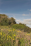 Israel, Mount Carmel. Wildflowers at Ofer forest scenic road