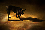 A small dog standing with its shadow no.2