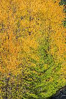 Autumn Color in the Washington Cascades