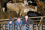 Listowel Mart: Attending the weanling and dairy sale at Lisyowel Mart on Wednesday were Jimmy Fitzmaurice, Listowel, Mike Joe Quilter, Lixnaw & denis O'Donnell, Listowel.