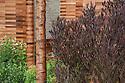 Purple hop bush (Dodonaea viscosa 'Purpurea') and coppery tree trunk of Manchurian cherry (Prunus maackii 'Amber Beauty'). Homebase Teenage Cancer Trust Garden, designed by Joe Swift, RHS Chelsea Flower Show 2012.