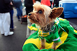 12/04/10-- Max, a Miniature Yorkshire, sports his Duck colors while his owner Bryan Walls of Lake Oswego tailgates before the Civil War game at Reser Stadium in Corvallis, Or..Photo by Jaime Valdez......