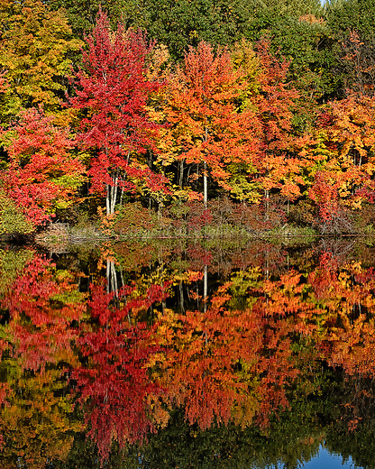 Fall foliage along the edge of Knight's Pond in Pelham, Massachusetts.