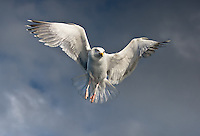 On the Wings of the Angels<br />