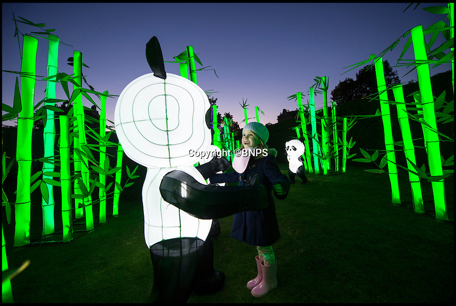 BNPS.co.uk (01202 558833)<br /> Pic: PhilYeomans/BNPS<br /> <br /> Leigha Swanson(6) meets an illuminated panda.<br /> <br /> The largest Chinese 'Festival of Light' seen in Europe is taking shape at the Longleat House in Wiltshire - A small army of over 50 skillled workers have flown in from the remote village of Zigong in central China to create the stunning spectacle.<br /> <br /> Among the different scenes are a 20-metre tall Chinese temple, a 70-metre-long dragon, created using more than 10,000 porcelain cups, bowls, plates and dishes, and the mythical qilin – a chimerical hooved creature with the head of a lion – featuring more than 30,000 glass phials filled with coloured liquid.<br /> <br /> Massive traditional Chinese masks are also featured and there is also a bamboo forest which is home to a family of life-size pandas, giant elephants, zebras, lions and deer as well as giant lotus flowers floating on the lake.<br /> <br /> Filled with thousands of LED lights and handmade by a team of 50 highly-skilled craftsmen from Zigong in China's Sichuan province, the lanterns recreate a magical world of myths and legends.<br /> <br /> Set amid the beautiful backdrop of the landscaped grounds and gardens surrounding Longleat House, the lit structures also spill out on to Half Mile Lake to create a stunning and enchanting experience for visitors.<br /> <br /> It's the first time a festival of this size has taken place in the UK and the Chinese team behind the spectacular event believe its size and complexity make it unique throughout Europe.