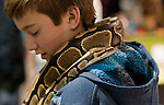 14 year old Jack Foley holds a ball python at the Reno Repticon event held on Sunday afternoon, February 10, 2013 at the Reno Livestock Events Center in Reno, Nevada.