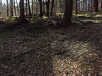 FOREST_LOCATION_90196