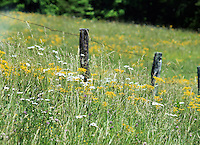 Stock photo: Rustic wooden fence on a slope in meadow surrounded by wild grass, wild daisy and tiny yellow flowers in the cades cove valley of the great smoky mountain Tennessee, USA.