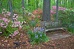 U.S. National Arboretum, Washington D.C.<br /> Bench on a pathway near the Lee Garden in the Azalea Collections,  spring