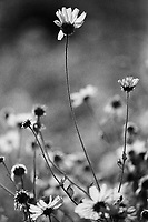 Spring Wildflowers, Ilford Delta Film, Irvine CA 2019