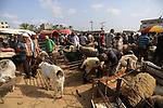 Palestinians gather at a livestock market, ahead of Eid al-Adha in Deir al-Balah, in the center of the Gaza Strip on July 28, 2020, as Muslims prepare for the sacrificial Eid al-Adha feast. Photo by Ashraf Amra