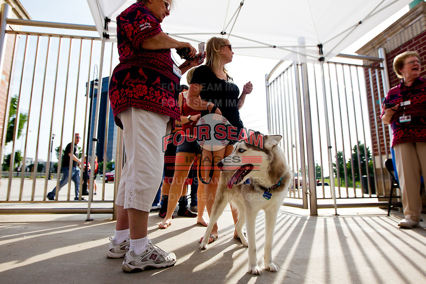 """A Springfield Cardinals Fan enters Hammons Field with their dog prior to a game between the Arkansas Travelers and the Springfield Cardinals at Hammons Field on May 5, 2012 in Springfield, Missouri. Saturday's game was called """"A Bark in the Park"""" Night, and fans could bring their dogs to Hammons Field with them. (David Welker/Four Seam Images)"""